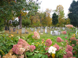 View of Headstones and Hydrangeas at Elm Street Cemetery